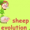 Sheep evolution